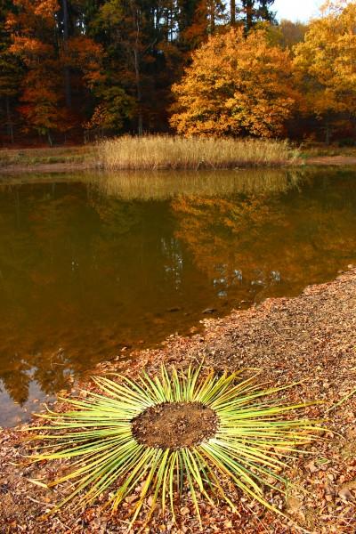 "November 2018,""Herbstsonne""Blätterkreis im Geißbachtal bei Hassel/Saarland"