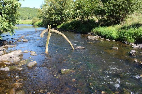 """September 2013,  """"Armer Fluss"""" Treibholz in der Nahe zwischen  Nohen und Kronweiler"""