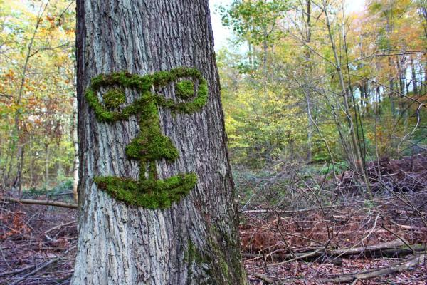 """Oktober 2013,  """"Baumgesicht""""  Moos an einem Eichenbaum im Wald bei Saarbrücken"""