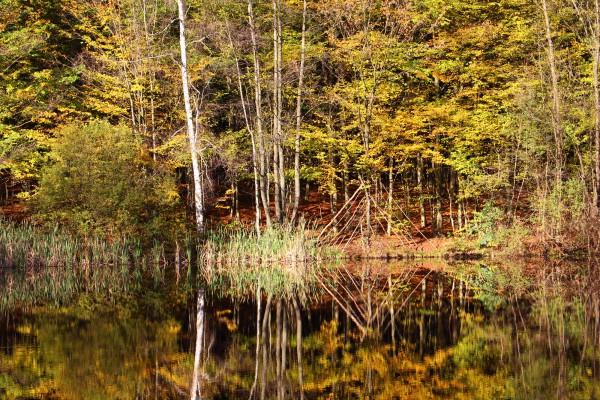 """November 2014,    """"Herbstliches Spiegelbild""""   Fundhölzer im Saarbrücker Urwald"""